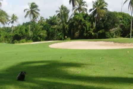Affe,Bahia,Brasilien,Golf,Hotel