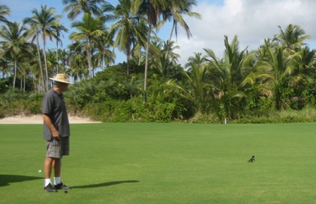 Teddy,Aeffchen,Golf,Transamerica,Brasil