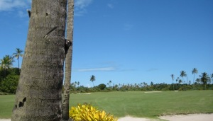 Affe,Golf,Canavieiras,Bahia,Brasilien