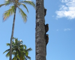 Macacos,Golf,Bahia_Tropical,Brasil
