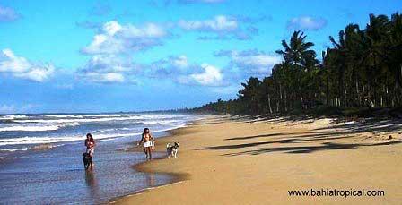 beach,canavieiras,bahia,brasilien