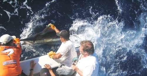 Fischen,Blue Marlin,BahiaBrasilien_2014