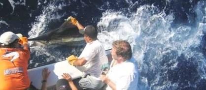 Big Game, Blue Marlin, Bahia,Brasil